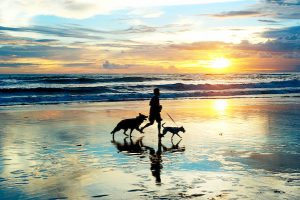 person running on the beach with two dogs