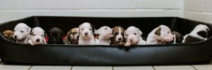 cute puppies in a dog bed