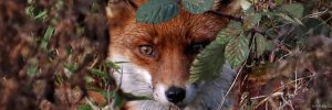 BBO Wildlife Trust